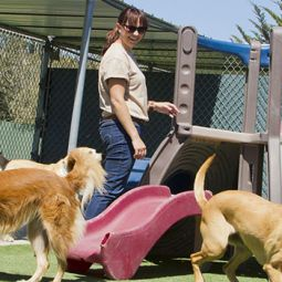 Dog Kennel Services in Galway