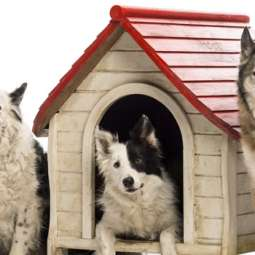Dog Kennel Services in Bray